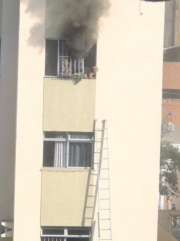 cachorro janela apartamento incêndio