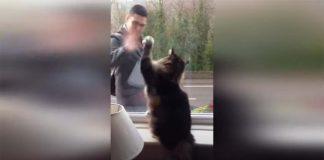 Gato acenando para tutor