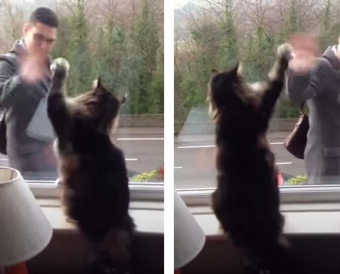 Gato acenando para o dono