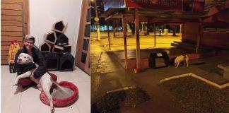 Casinhas de papelão para animais de rua