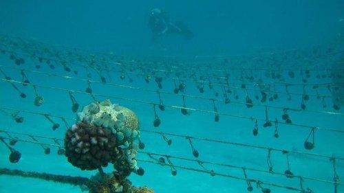 esponjas do mar em Zanzibar
