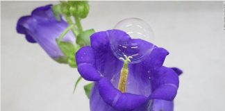 bolha de sabão em flores