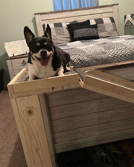 Sammy posando na cama com a rampa