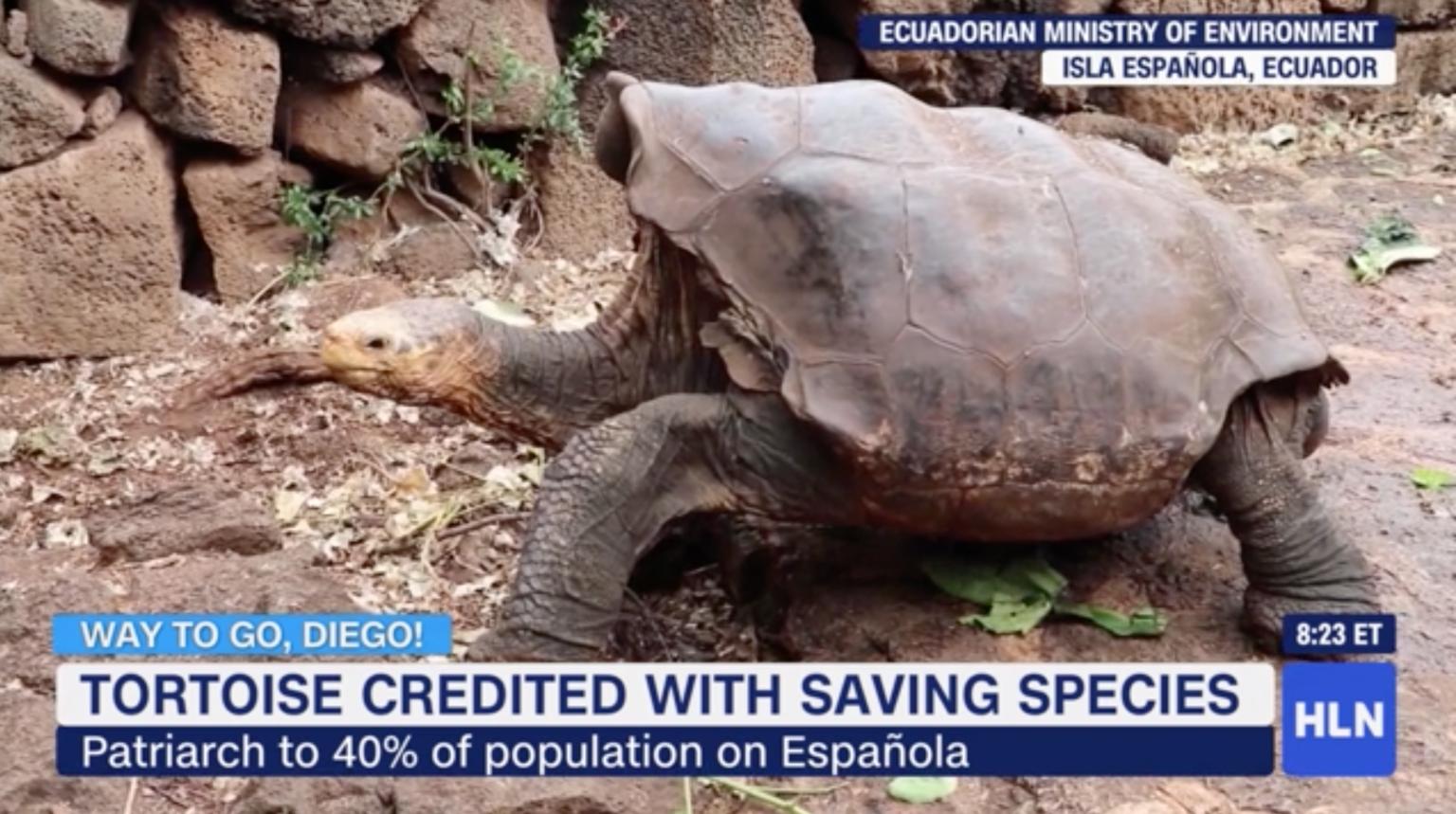 print reportagem tartaruga salvou espécie extinção
