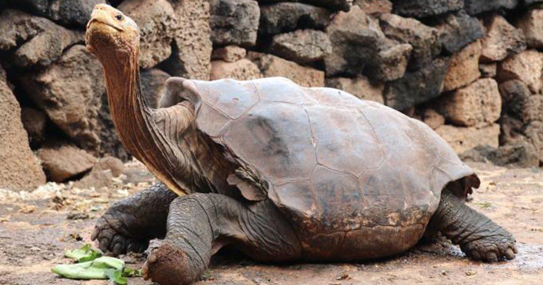 tartaruga caminhando