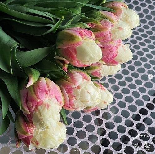 tulipas deitadas