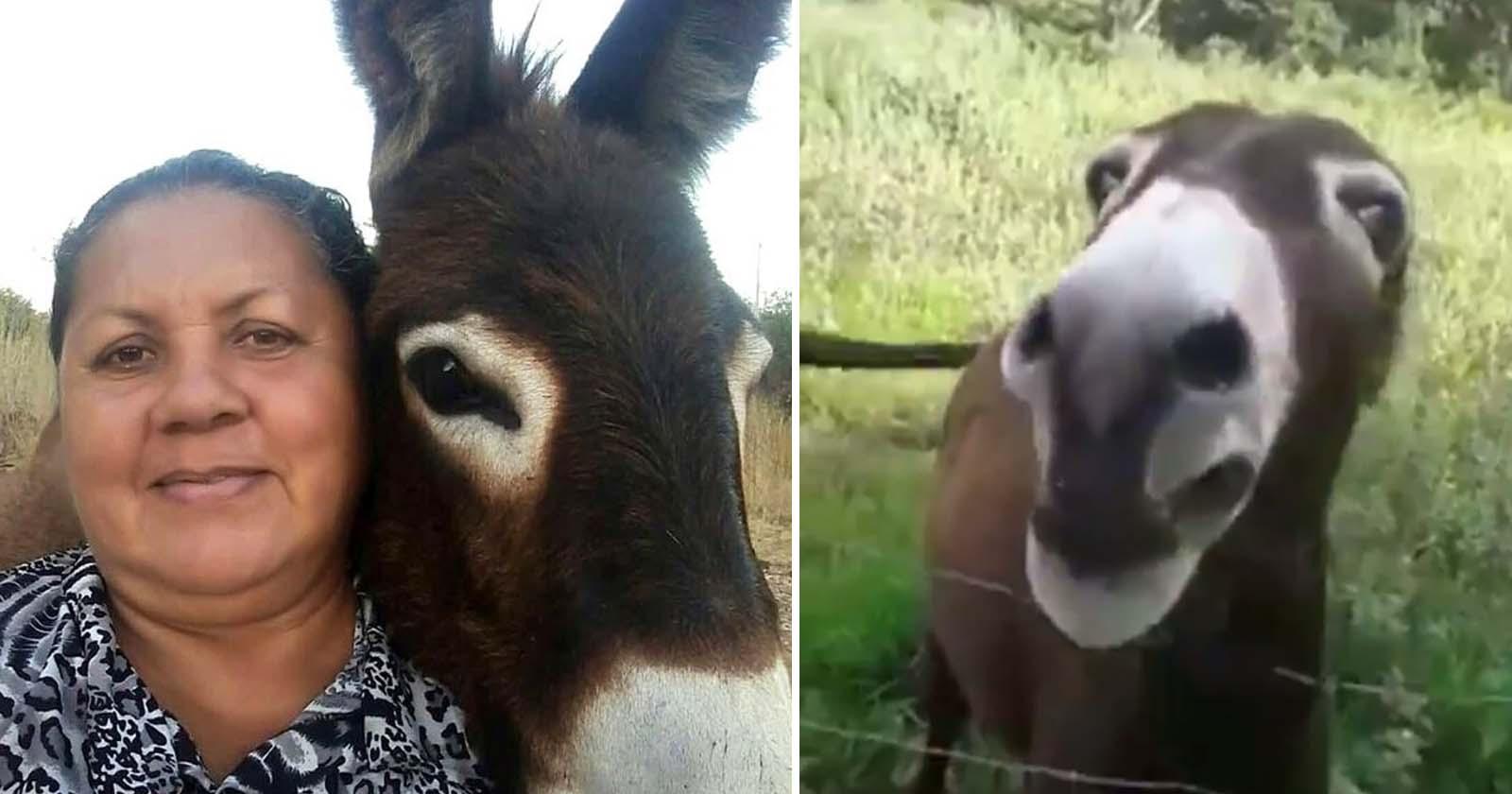 selfie agricultora jumentinho