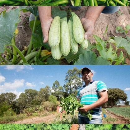 agricultor em plantação