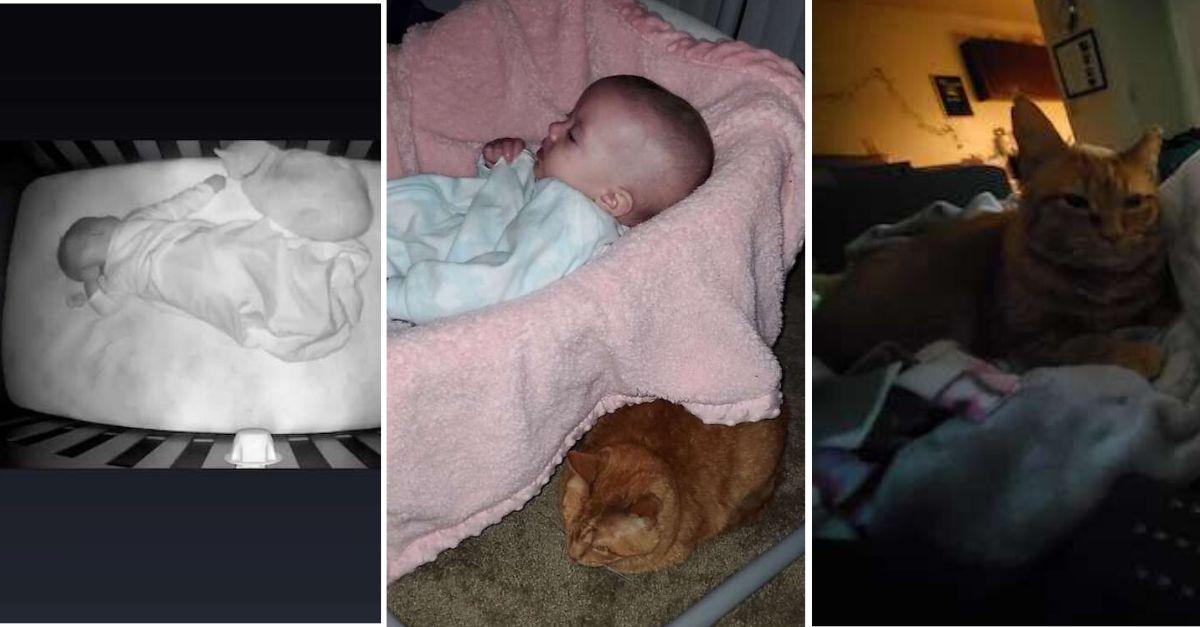 baba eletronica flagra gatinho dormindo com bebe