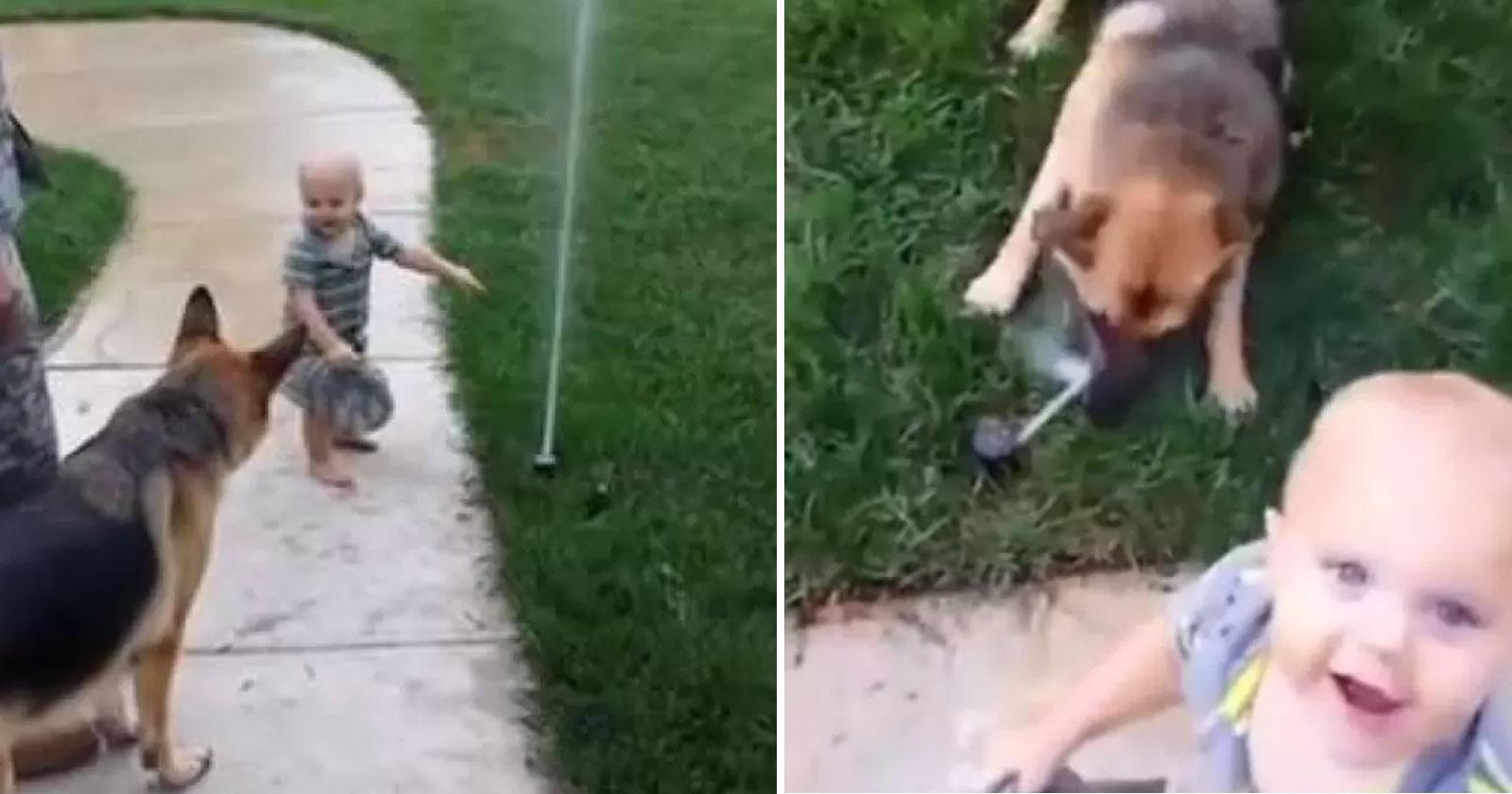 Bebê ajuda pastor alemão a perder medo de irrigador de jardim e vídeo viraliza 1