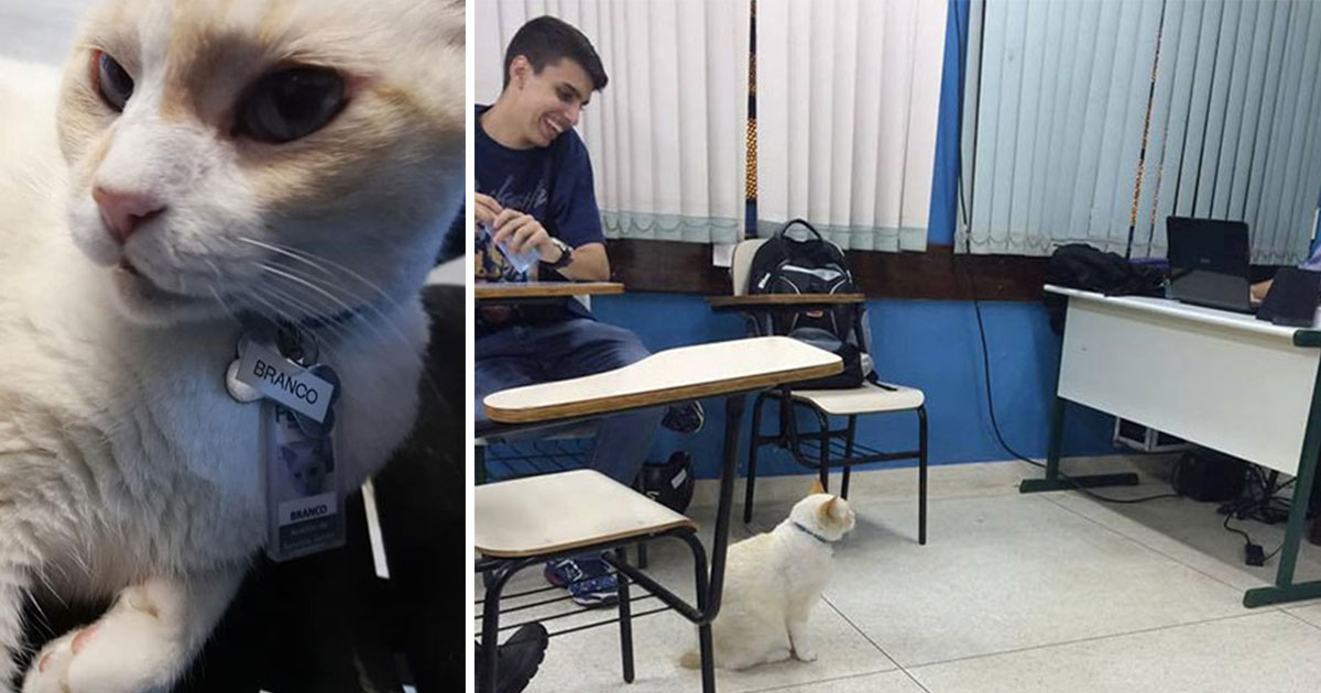 Dona segue gato fujão e descobre que ele frequenta faculdade em Santos todo dia, desde 2009 2