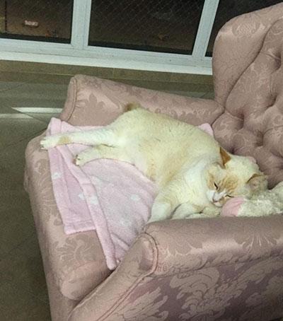 Dona segue gato fujão e descobre que ele frequenta faculdade em Santos todo dia, desde 2009 1
