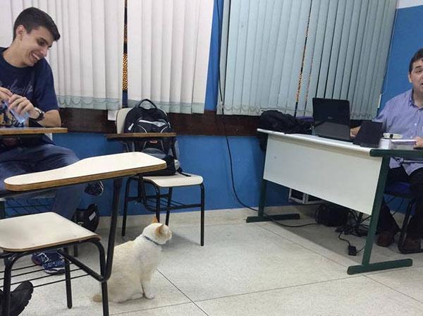 Branco na sala de aula