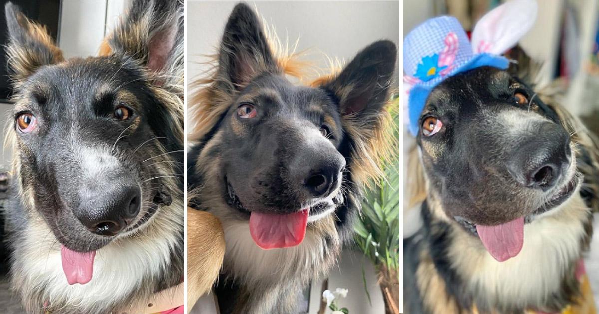 """Cachorro com rosto desfigurado pela própria mãe ganha um lar e vira """"cão terapeuta"""" 1"""