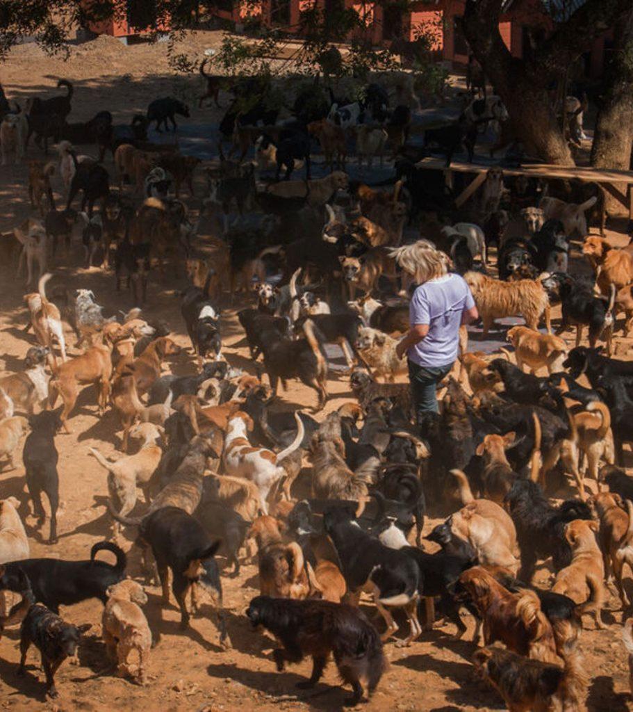 cães pátio abrigo rodeando voluntária