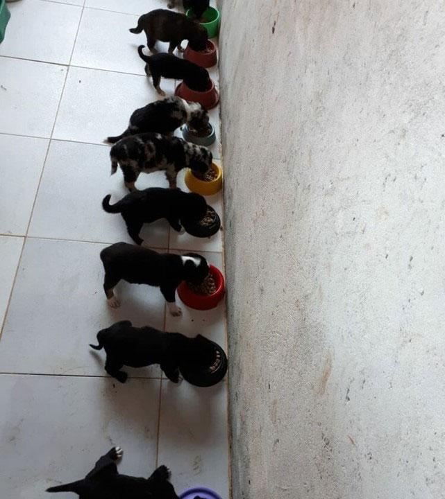 filhotes cachorros comendo ração
