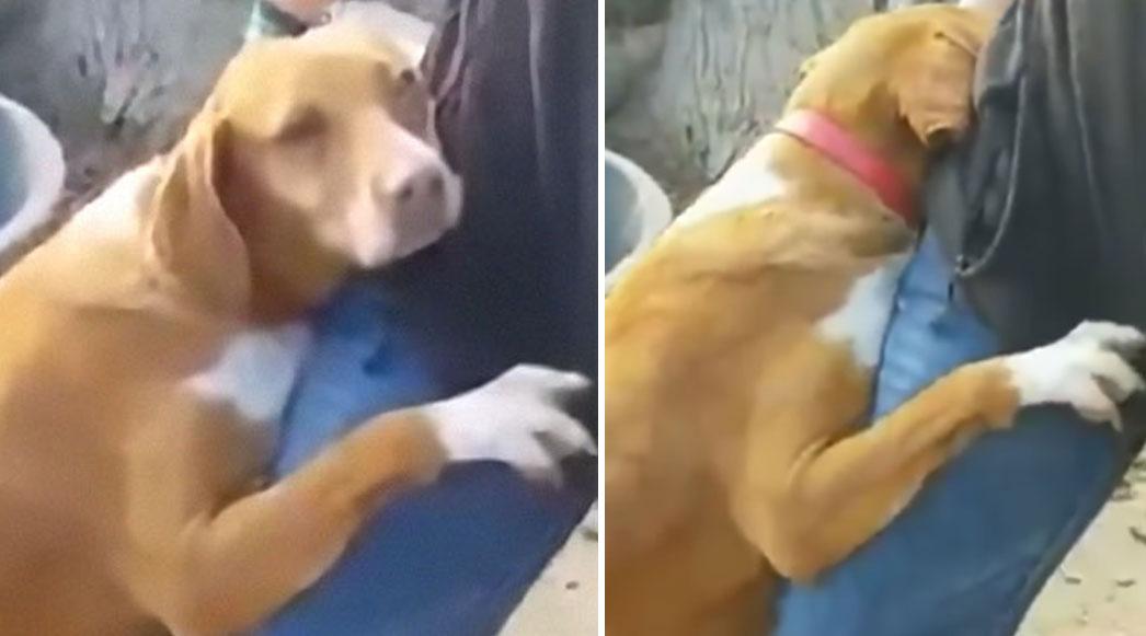 Repórter adota cãozinho que não parava de abraçá-lo durante reportagem 1