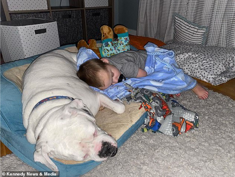 Câmera registra momento fofo que bebê desce da cama para dormir com seu cachorro! 11