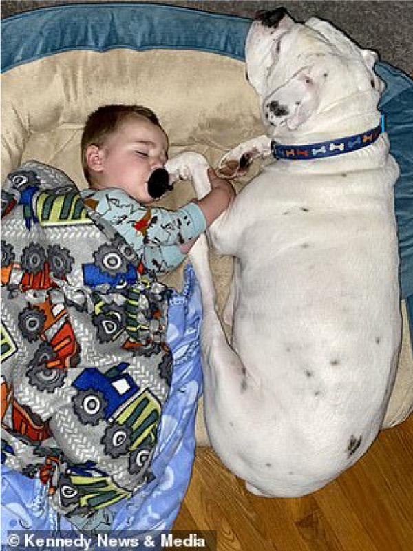 Câmera registra momento fofo que bebê desce da cama para dormir com seu cachorro! 9