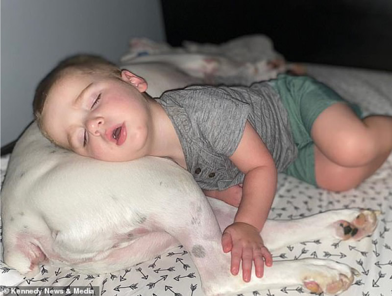 Câmera registra momento fofo que bebê desce da cama para dormir com seu cachorro! 10