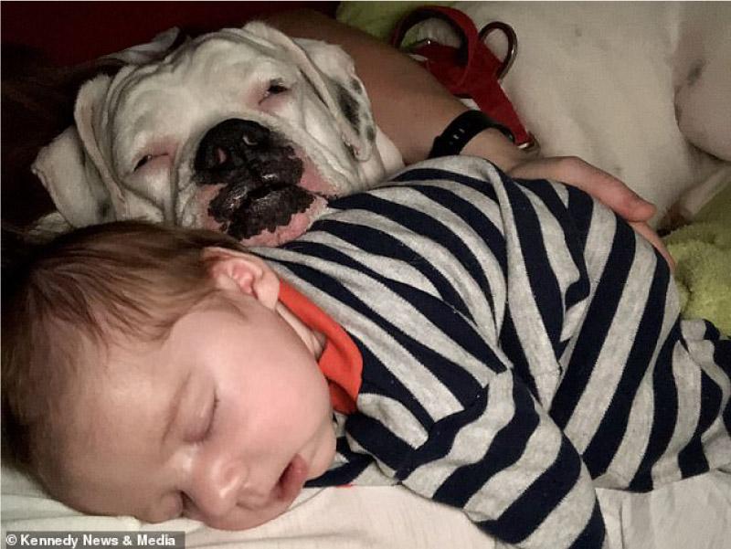 Finn e Brutus dormindo
