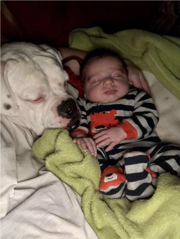 menino e cachorro dormindo juntos