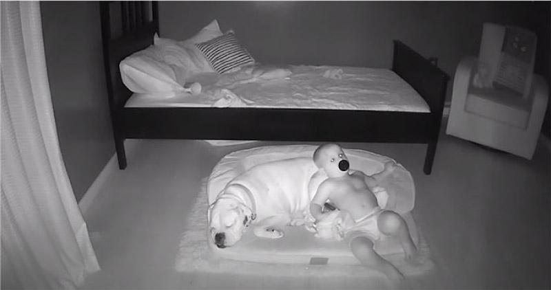 Câmera registra momento fofo que bebê desce da cama para dormir com seu cachorro! 7