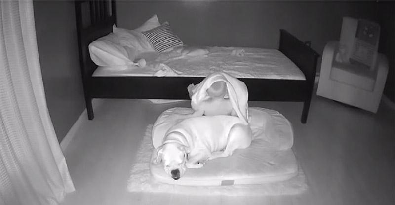 Câmera registra momento fofo que bebê desce da cama para dormir com seu cachorro! 6