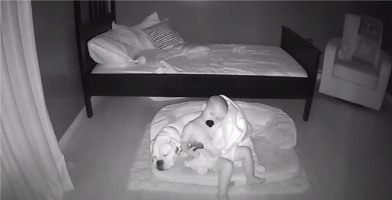 Câmera registra momento fofo que bebê desce da cama para dormir com seu cachorro! 4