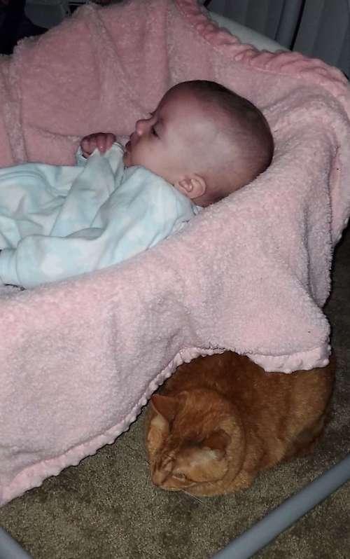 gatinho dormindo com bebê
