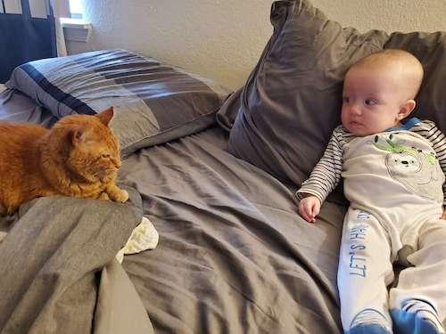 gatinho ranzinza faz carinho em bebê