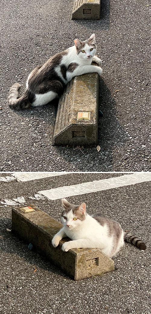 10 registros fofíneos de gatos usando para-choques de estacionamento como travesseiros 3