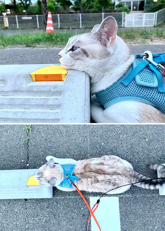 10 registros fofíneos de gatos usando para-choques de estacionamento como travesseiros 5