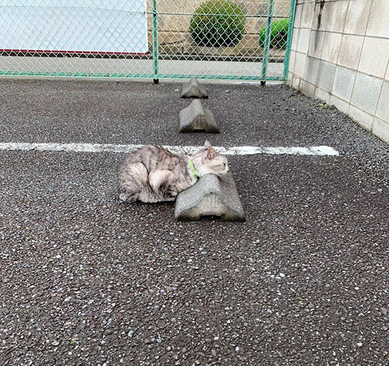 10 registros fofíneos de gatos usando para-choques de estacionamento como travesseiros 4