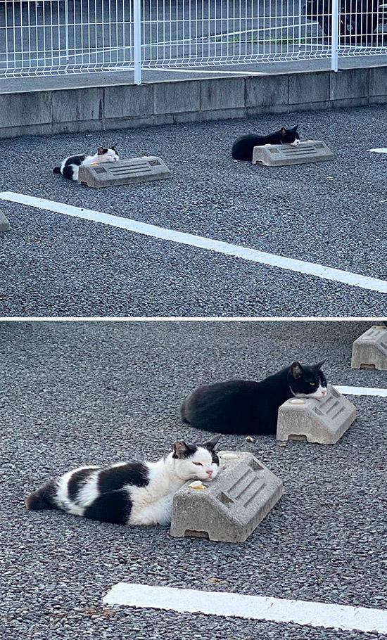 dois gatos deitados no para-choque