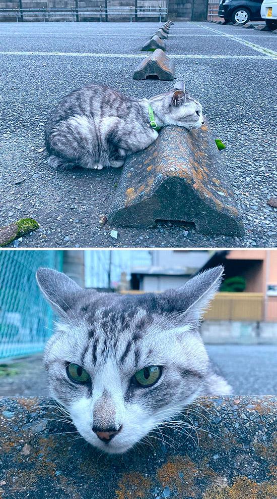 gato descansando no para-choque
