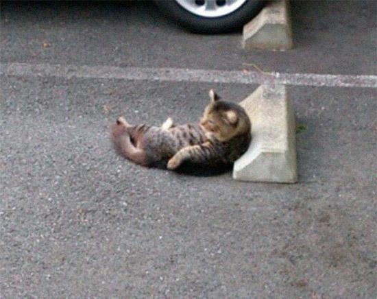 gato dormindo no para-choque