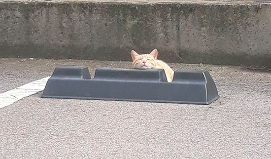 10 registros fofíneos de gatos usando para-choques de estacionamento como travesseiros 1