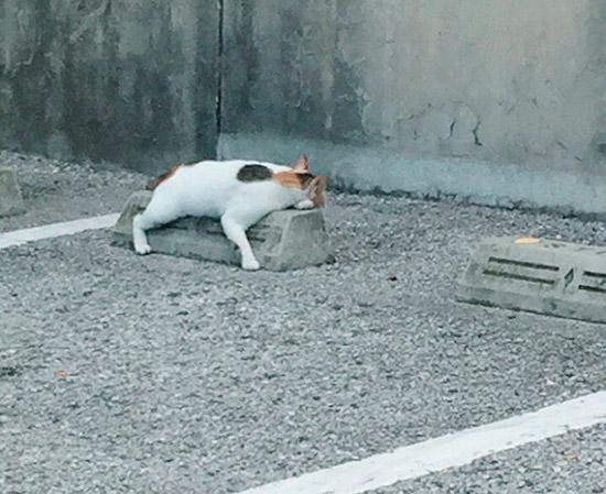 10 registros fofíneos de gatos usando para-choques de estacionamento como travesseiros 2