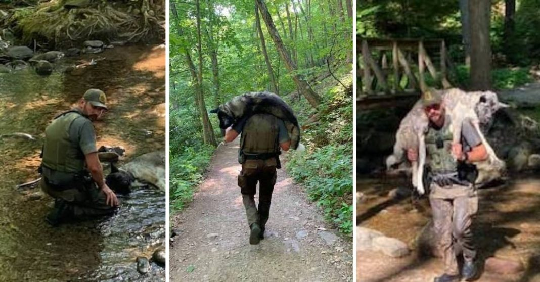 guarda florestal salva cachorro desidratado em parque