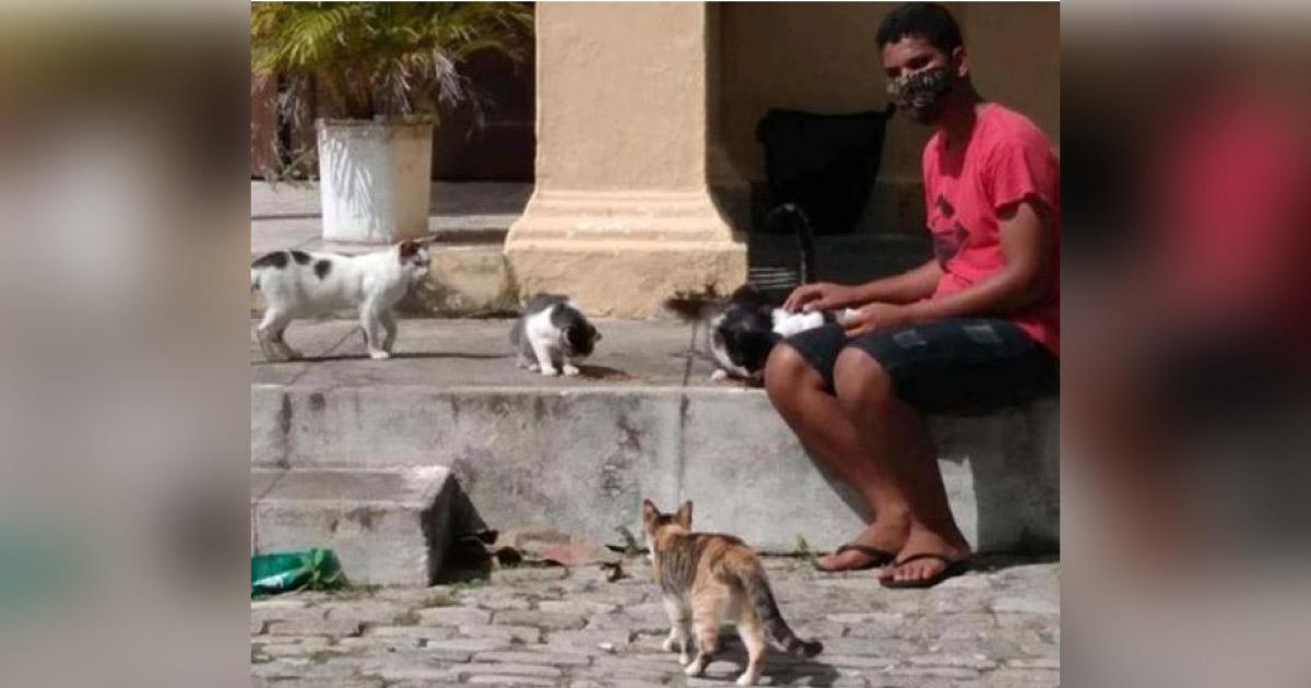 Jovem faz rifa de liquidificador para ajudar gatos abandonados em cemitério em Maceió 5