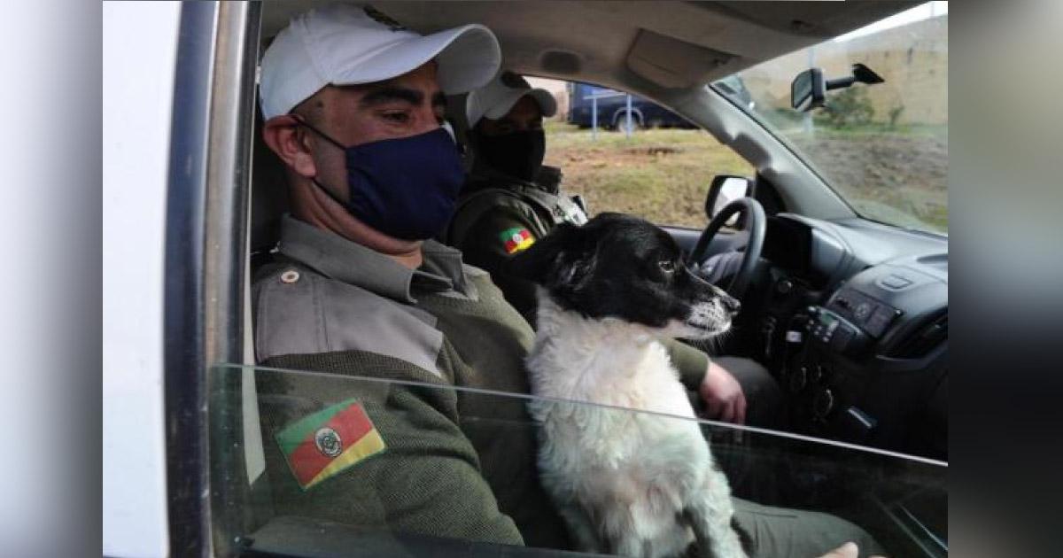 Cachorrinha que evitou entrada de drogas em presídio é adotada por policiais 2