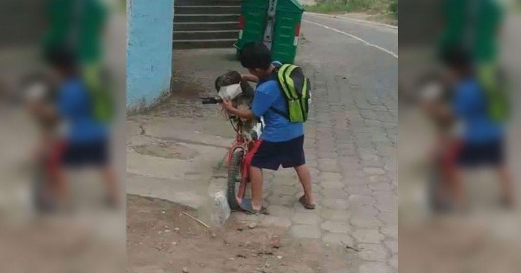 menino põe máscara proteção cachorro passeio bicicleta