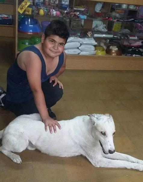 menino passa mão cachorro branco deitado chão clínica veterinária