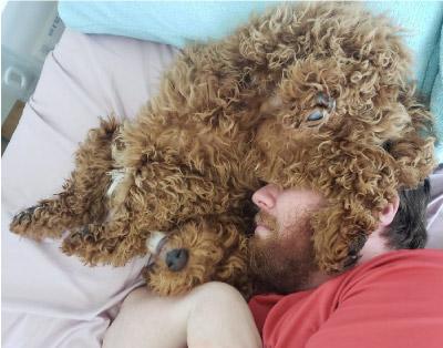homem dormindo com cachorro