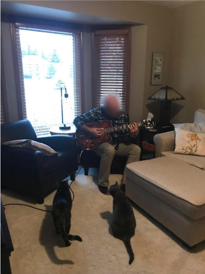 homem tocando violão para gatos