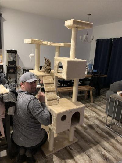 homem fazendo casa para gato