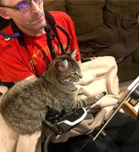 gato vendo tv