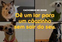 campanha Pedigree e zoom para adoção de animais
