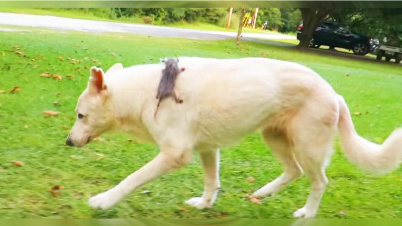 cachorro e gambá andando juntos